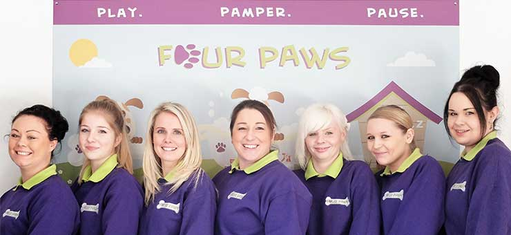 Four Paws launches new dog grooming qualification!
