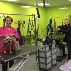 The students learning the skill of hand stripping in their Dog Grooming Diploma Course