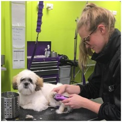 A relaxed puppy enjoys his groom!