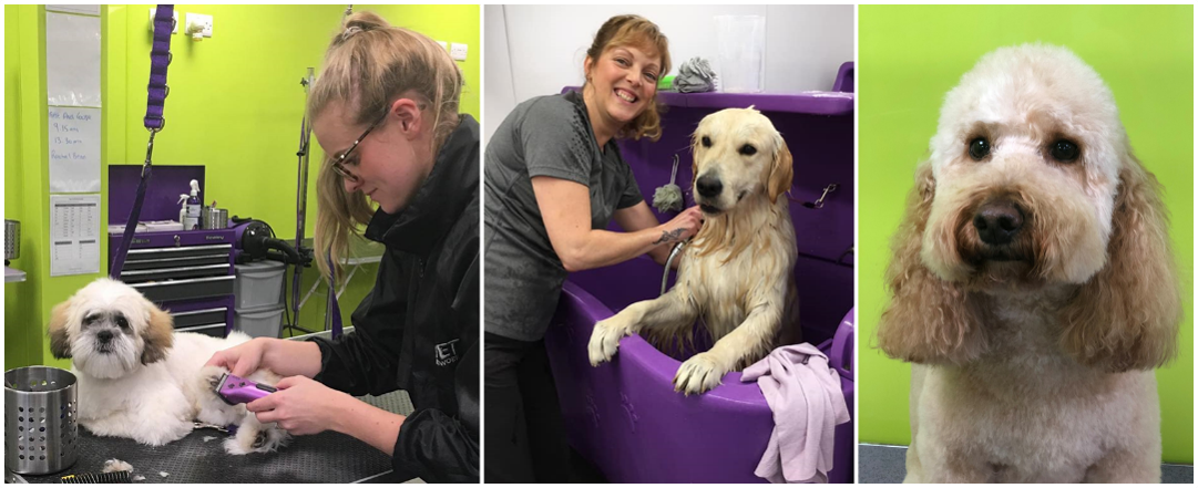 Four Paws Groom School Dog Grooming Courses Northwich Cheshire