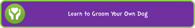 Learn to Groom Your Own Dog