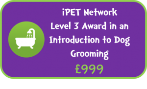 iPET Network Level 3 Award in an Introduction to Dog Grooming