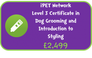 iPET Network  Level 3 Certificate in Dog Grooming and Introduction to Styling