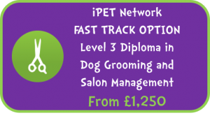 iPET Network  FAST TRACK OPTION Level 3 Diploma in Dog Grooming and Salon Management