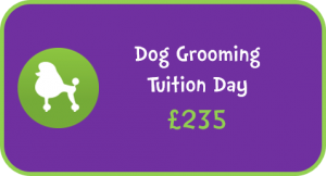 Dog Grooming Tuition Day